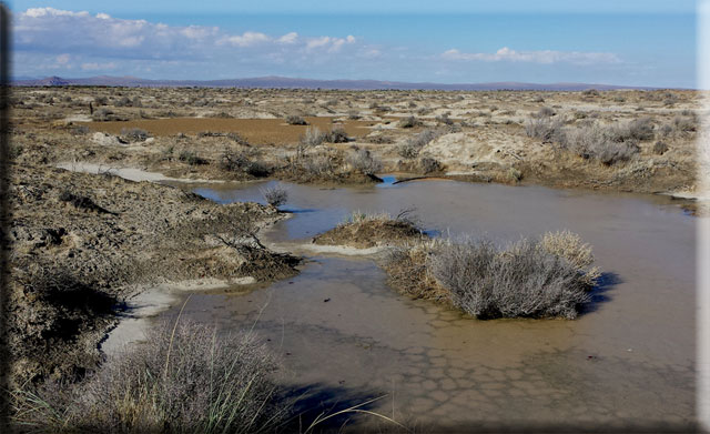 Piute Ponds after rain